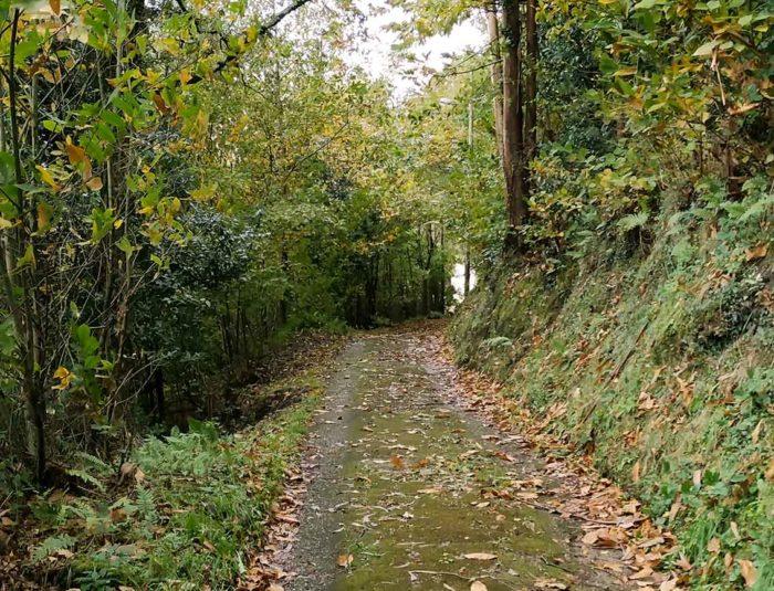 Camino de Santiago monte Balsera